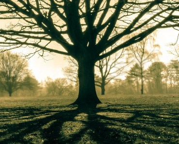 Nature Tree Field Light