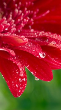 Red Flower with Dewdrops