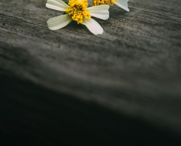 Two Flowers On Wood