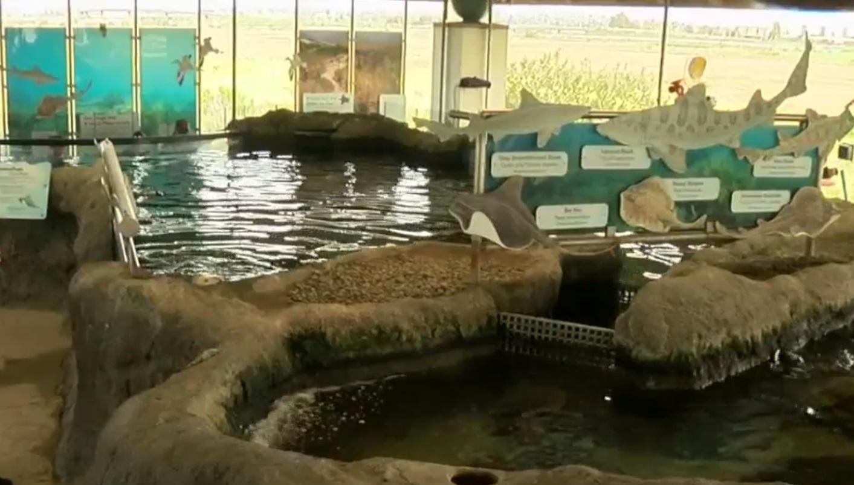 High School Student Jumps Into Shark Tank At Local Chula