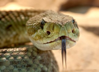 Man Bit By Rattlesnake At Colorado Dog Park