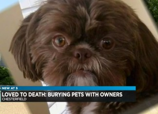 Woman Requests Healthy Dog Be Euthanized And Buried With Her