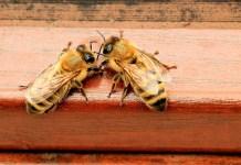 Doctors Find Bees In Woman's Eye, Feasting On Her Tears