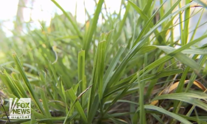City Threatens Forclosure On Man's Home For Overgrown Grass