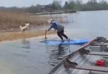 Woman Eats It Attempting To Paddleboard
