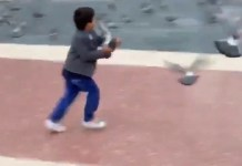 Someone Needs To Check On This Kid Who Throws Pigeons At People
