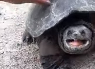 Girl Learns The Hard Way You Shouldn't Pet Strange Turtles