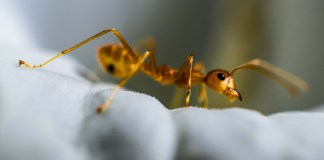 International United Airlines Flight Infested With Ants