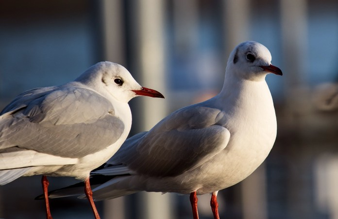 Seagulls Keep Elderly UK Couple From Leaving Home For Six Days