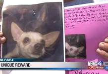 Arizona Man Offers To Give Away His Home In Exchange For Missing Chihuahua