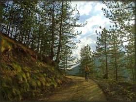 Na osunčanim šumskim putevima...