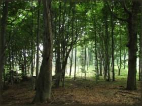 Šuma na Šomrdi