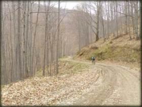 Put lagano vijuga penjući se kroz bukovu šumu ka visoravni