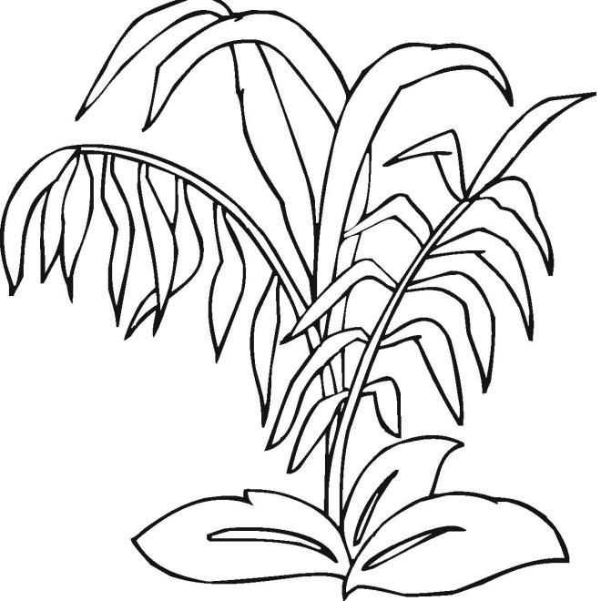 ocean plants coloring pages free coloring pages printable