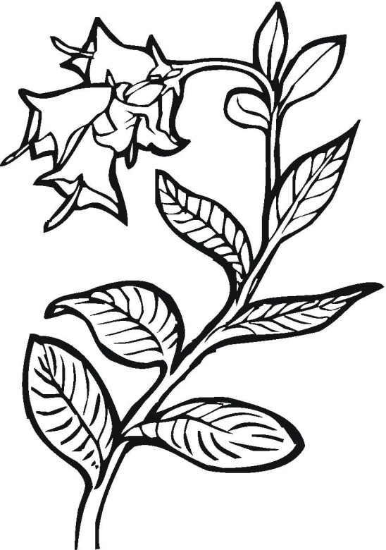 free plants coloring pages