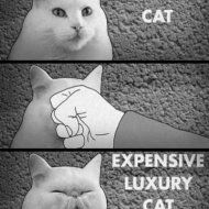 tumblr_normal_cat_punch_expensive_cat