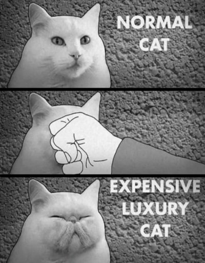 tumblr_normal_cat_punch_expensive_cat discretion