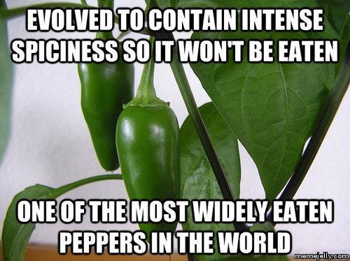 14-05-pepper-evolution