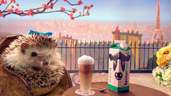 hedgehogs fiscal update