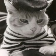 15-04-lmao-french-cat