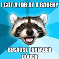 16-01-kneaded-dough-pun-raccoon