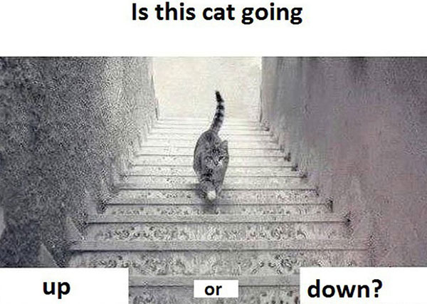 16-03-cat-going-up-or-down-stairs-illusion