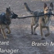 16-04-assistant-to-the-branch-manager-dog