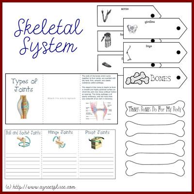 free anatomy lapbook