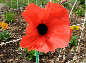 Coffee Filter Poppy Craft