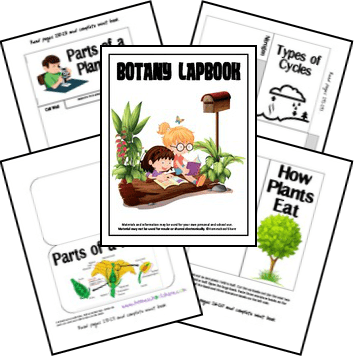 Free Botany Lapbook