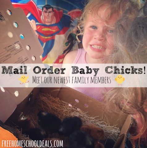 mail order baby chicks
