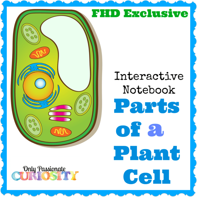 Free plant cell interactive notebook instant download free free homeschool deals plant cell interactive notebook this plant cells interactive notebook pack is perfect for kids in fourth to sixth grades ccuart Choice Image