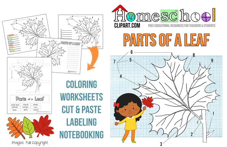 FREE Parts Of A Leaf Unit Study Free Homeschool Deals