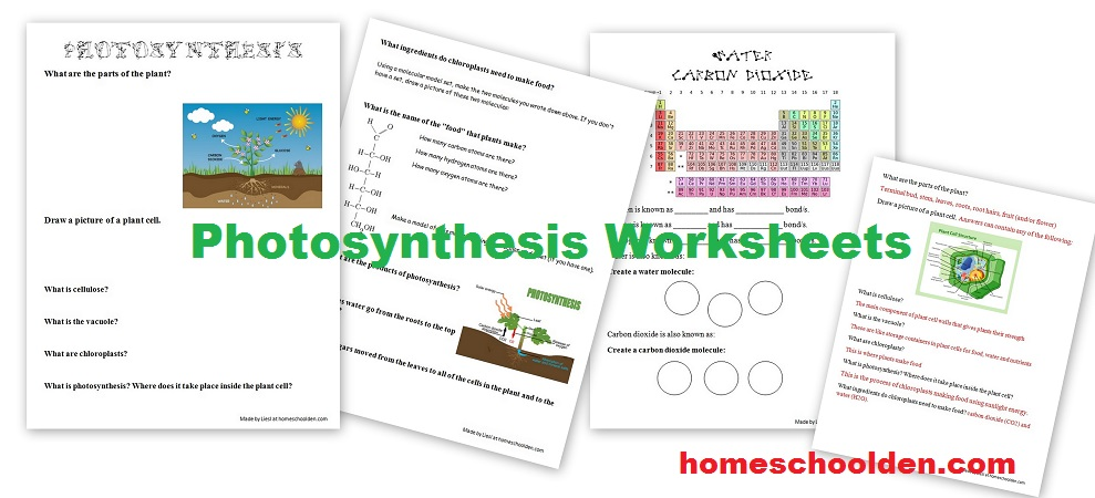Free Photosynthesis Worksheets Free Homeschool Deals