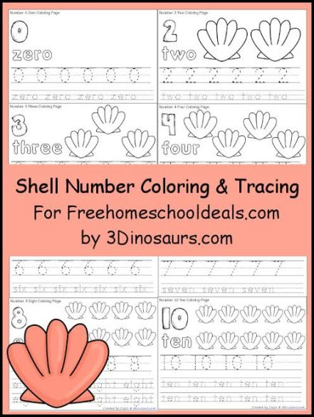 SHELL NUMBER TRACE & COLOR PRINTABLES (Instant Download)