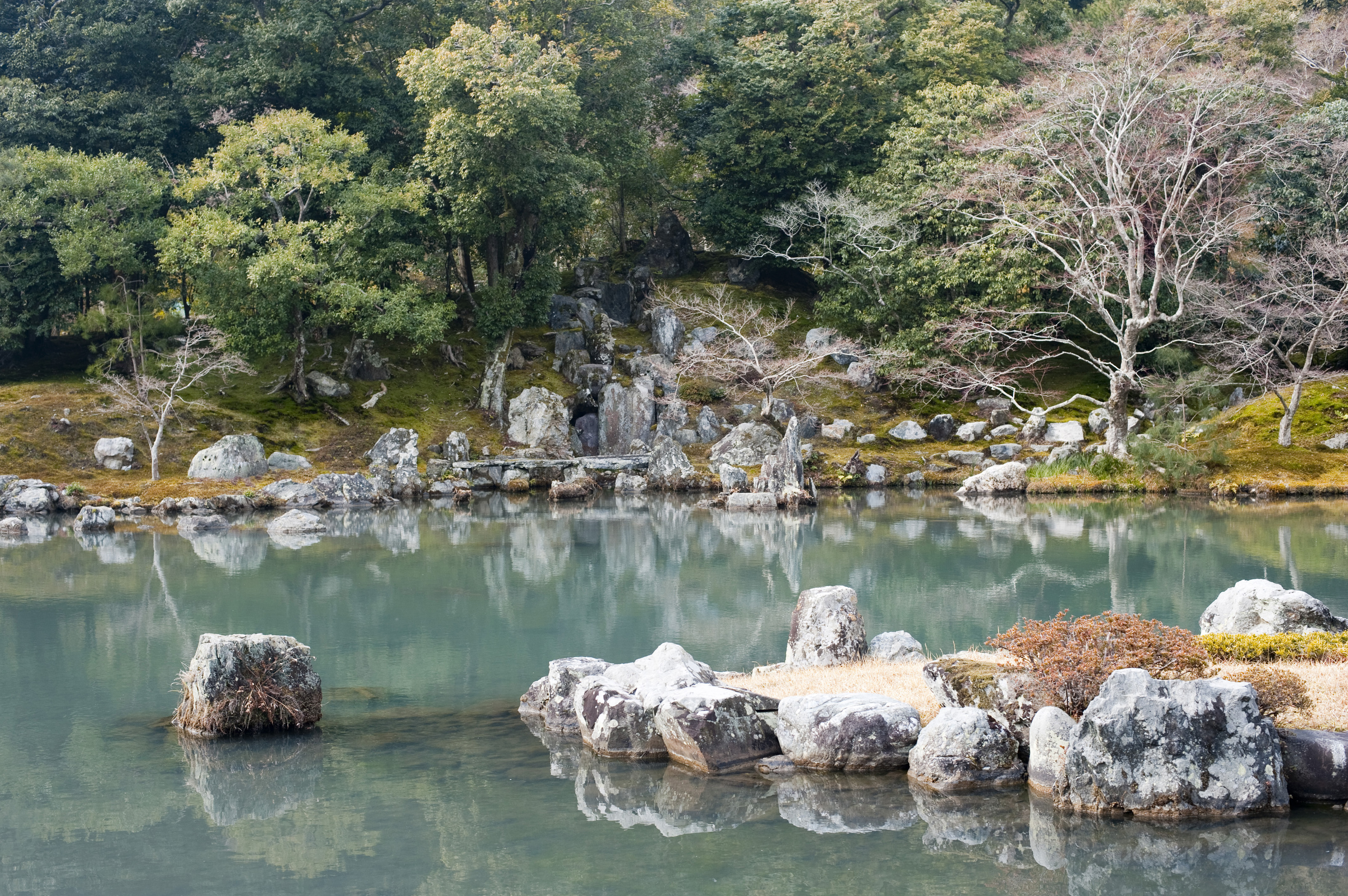 Japanese Water Plants