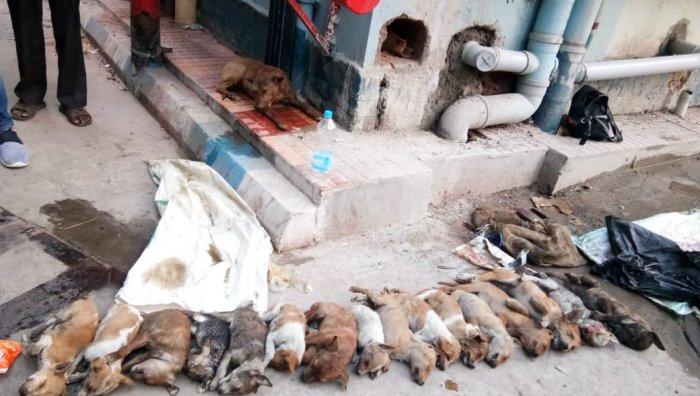 puppys killed