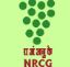 NRCG Recruitment 2017 For Senior Research Fellow Posts at nrcgrapes.nic.in