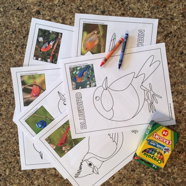 - Printable Bird Coloring Pages
