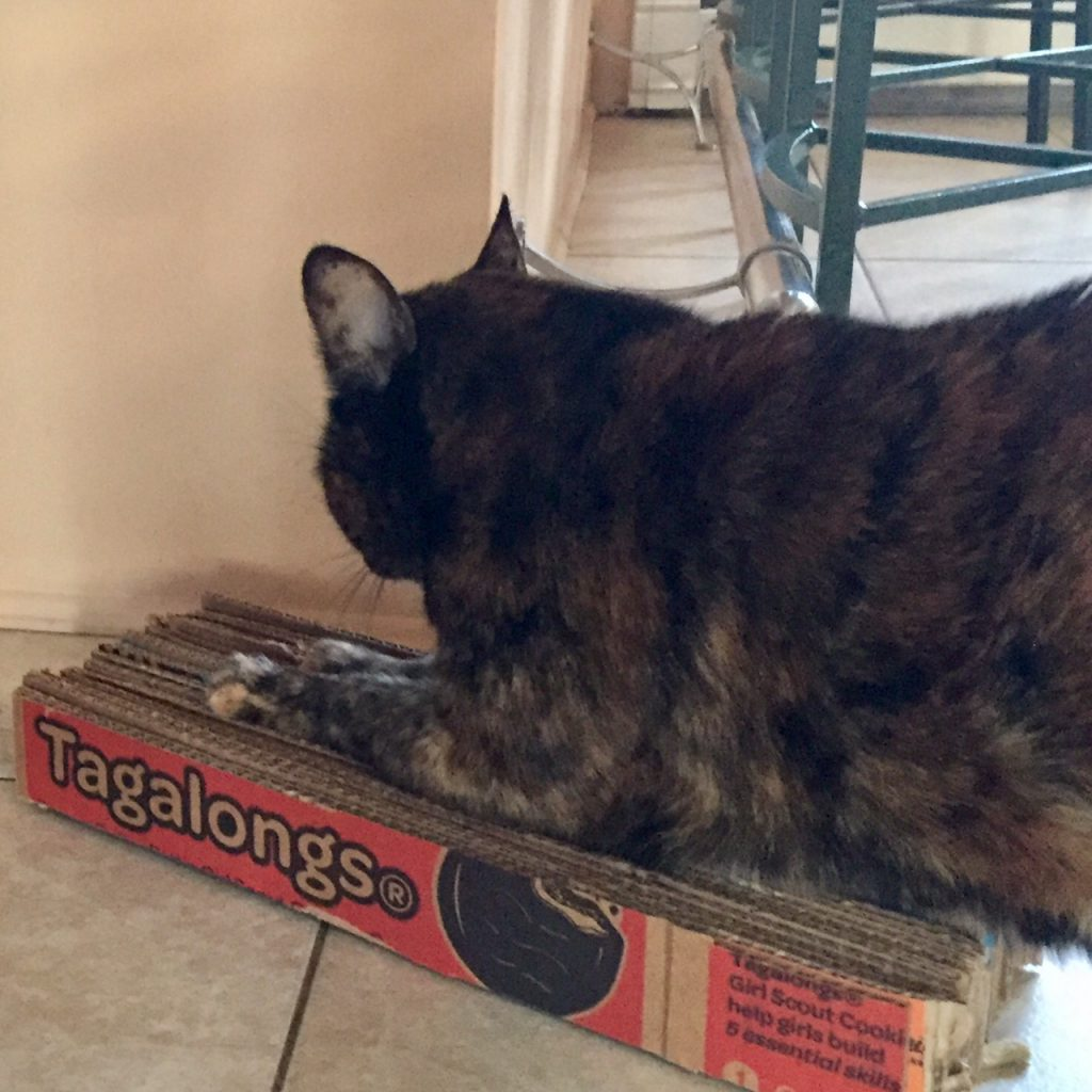 Make A Cat Scratcher From Recycled Corrugated Cardboard Boxes