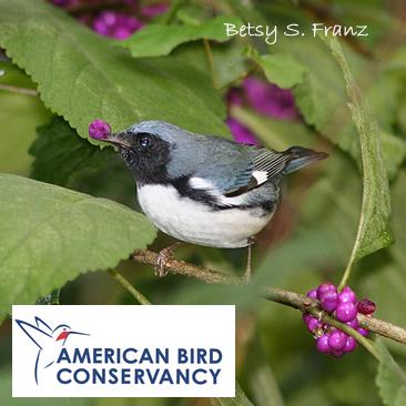 The American Bird Conservancy