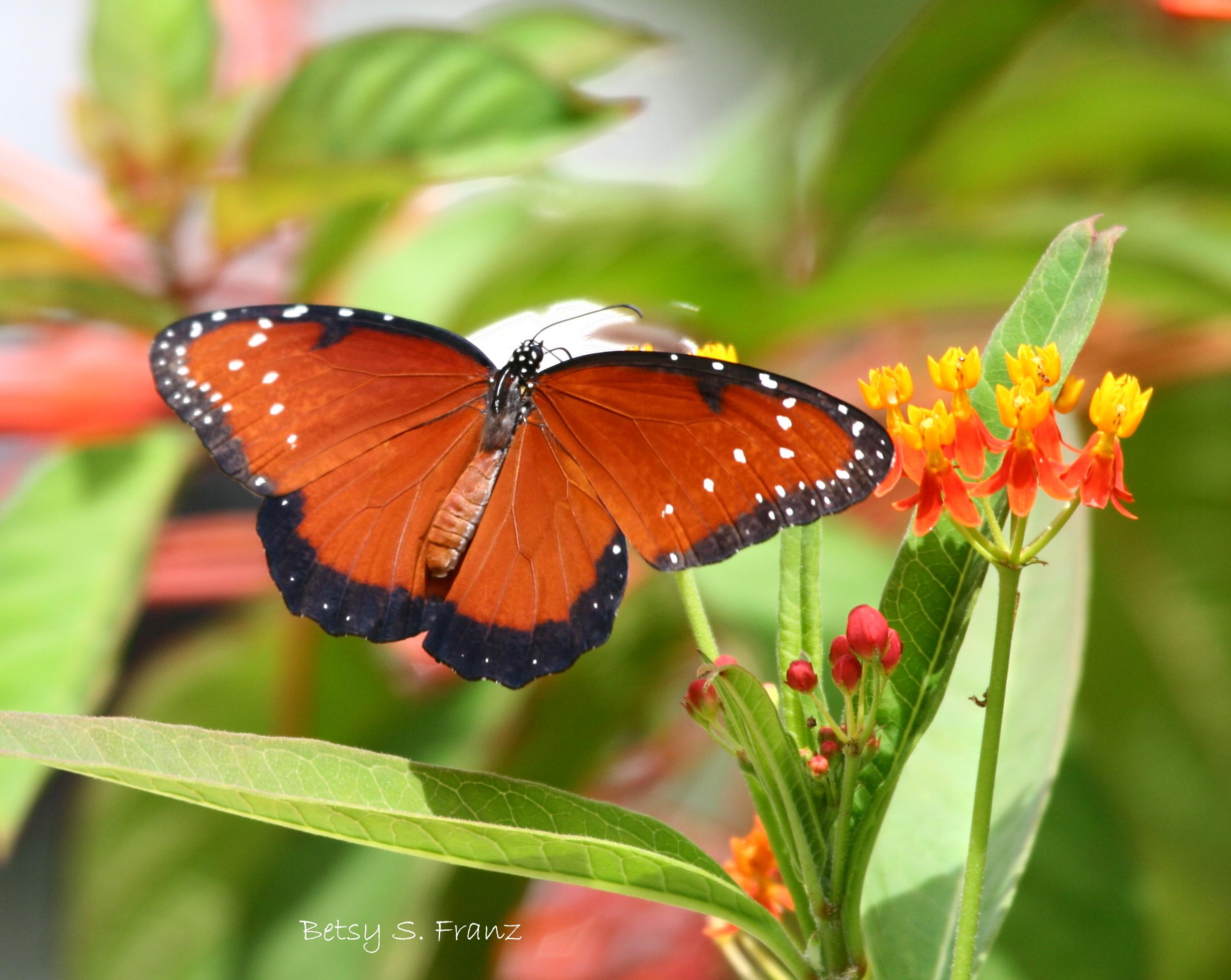10 Tips for Creating a Wildlife Friendly Garden