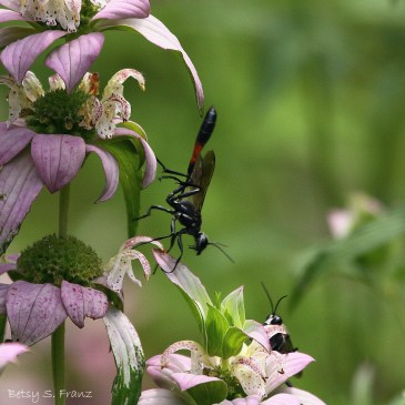 11 Websites to Help you ID Insects