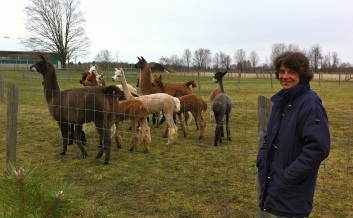 Ute on the Farm with Alpacas and Llamas