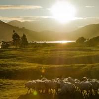 Stoprocentně čistý Nový Zéland