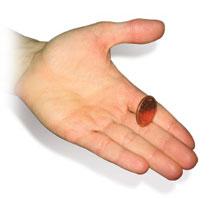 Easy Coin Tricks Anyone Can Do!