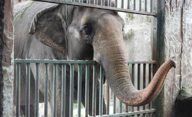 Mali The Loneliest Elephant