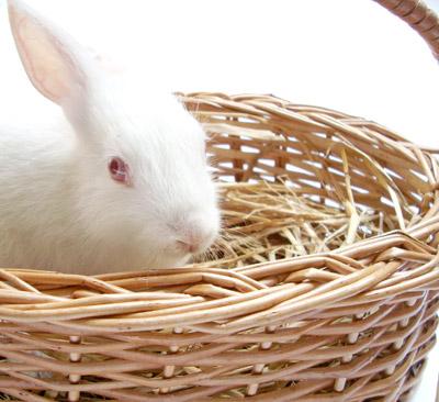 bunny in basket