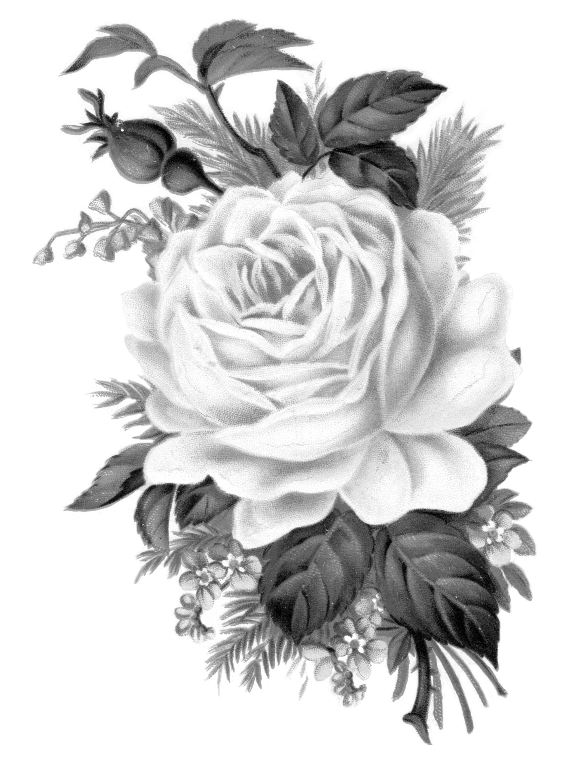 Clip Art Royalty Free Gorgeous Vintage Rose Image