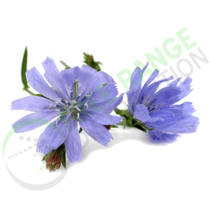 Inulin - Chicory Root